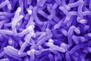 Что такое кишечная инфекция?