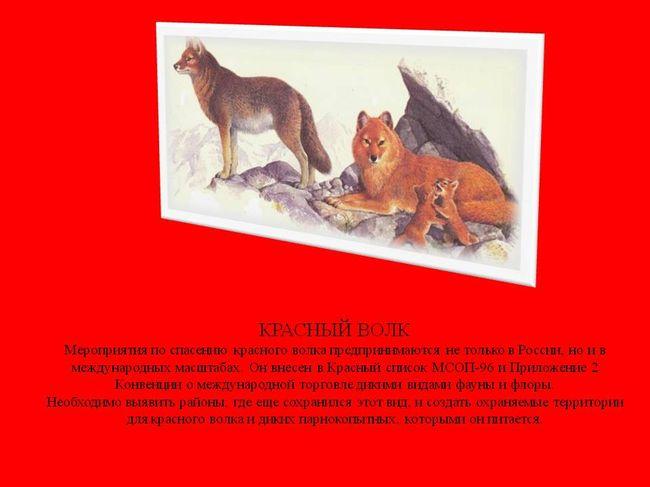 смотреть картинки животных из красной книги красноярского края будут иметь длительный