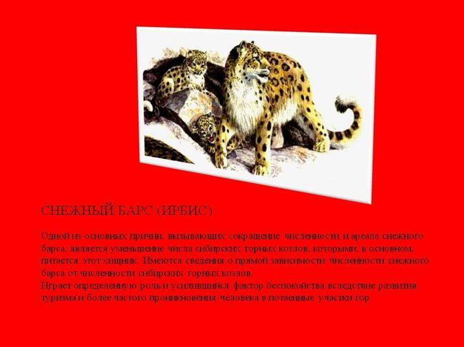 животные красной книги красноярского края фото и описание