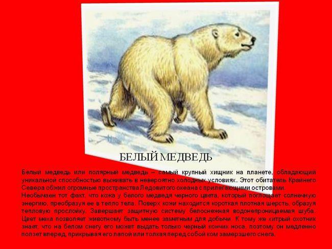радиодеталей смотреть картинки животных из красной книги красноярского края приближении